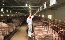 Nhập khẩu thịt lợn tăng vọt 404%, giá lợn hơi chạm đáy, Hội Chăn nuôi kiến nghị khẩn Thủ tướng