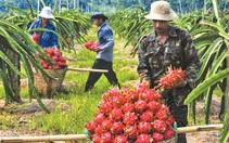 Xuất khẩu trái cây kỳ vọng kéo lại đơn hàng dịp cuối năm
