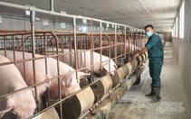 Giá lợn theo cung cầu nên không can thiệp điều tiết được
