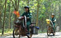 Tập đoàn Cao su Việt Nam (GVR) sắp chia cổ tức 6% bằng tiền mặt