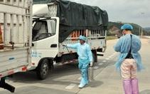 Thấy gì qua phát hiện virus SARS-CoV-2 trên bao bì thanh long xuất khẩu?