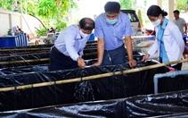Lươn đồng, cá rô quá lứa, nông dân mỏi mòn đợi bán