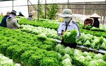 Lâm Đồng kết nối cung cầu nông sản qua thương mại điện tử