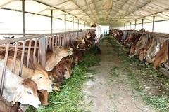 Doanh thu bình quân của mỗi trang trại tại Hà Nội đạt 2,2 tỷ đồng/năm