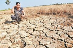 Xâm nhập mặn ảnh hưởng nghiêm trọng tới nông nghiệp vùng ĐBSCL