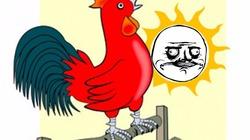 Con gà trống nó... gì con gà mái?
