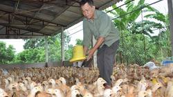Kinh tế trang trại cần những chính sách mới