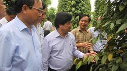 Quảng Trị kích cầu các sản phẩm nông nghiệp chủ lực