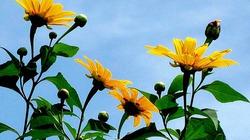 Hoa dại Đà Lạt tỏa hương, khoe sắc trong tiết trời Thu