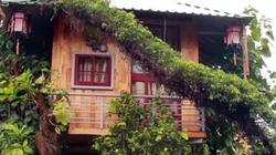 Người đàn ông làm nhà trăm triệu trên cây bồ đề ở Bà Rịa-Vũng Tàu