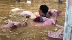 Người cùng lợn trong thời khắc sinh tử, hình ảnh không thể nào quên