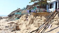 Cận cảnh sạt lở nghiêm trọng ở bãi biển thuộc top 10 đẹp nhất Việt Nam