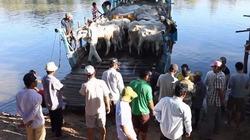 Nhộn nhịp chợ bò Tà Ngáo lớn nhất miền Tây mùa nước lũ