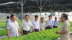 Tươi xanh trên quê hương Quảng Trị