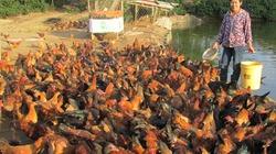 Nở rộ những mô hình kinh tế trang trại ở Quảng Trị