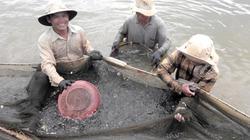 Nông dân Bình Định trúng vụ tôm kỷ lục trong 10 năm qua