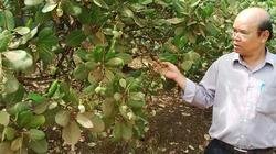 Hạt điều Hưng Phước chủ động sản xuất sạch để tiến ra thị trường thế giới