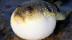 """Cẩn trọng với 5 loại hải sản phổ biến nhưng """"dễ dính"""" độc hại"""