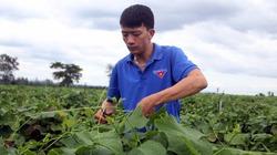 Thợ đóng tàu bỏ phố về quê trồng rau su su, lãi hơn 20 triệu đồng/tháng