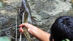 5 loài cá sông đặc sản đắt giá ở miền Tây xứ Nghệ