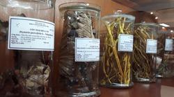 Thực hư sâm Ngọc Linh và một số thảo dược của Việt Nam chữa khỏi ung thư?