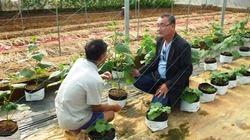 Gần 70 vẫn bỏ nửa tỉ lên núi trồng rau công nghệ cao