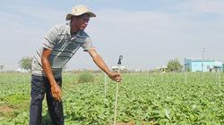 Công nghệ tưới nước tiết kiệm giúp tăng năng suất cây trồng