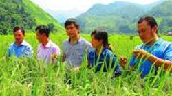 Sơn La lấy nông thôn mới làm động lực bứt phá
