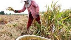 Bảo hiểm nông nghiệp - Kỳ vọng đổi mới