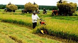 Vì sao ít doanh nghiệp đầu tư vào nông nghiệp?