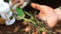 Góc khuất thị trường thuốc bảo vệ thực vật
