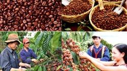 Cà phê Tây Nguyên: Chuyện 100 năm và những héc-ta bạc tỷ