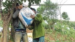 Nông sản đi cáp treo ở miền tây Quảng Trị