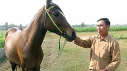 Về nơi đàn ông mê ngựa hơn mê... vợ