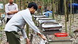 Luồn rừng thu trăm triệu từ ong