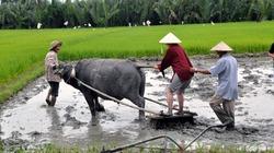 Nông dân Việt dạy Tây lội bùn cày ruộng, thổi lửa nấu cơm