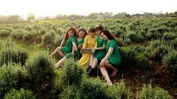 Cánh đồng oải hương đẹp mê hồn ở ngoại thành Hà Nội