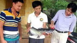 Thịnh Cá nổi danh với nghề nuôi cá lồng trên hồ Thác Bà