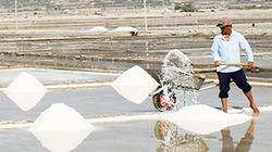 Diêm dân kê bùn trên cát tạo cánh đồng muối