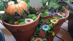 Kiến tạo vườn mini cho nhà phố từ những chiếc chậu hỏng