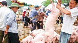 Giá lợn giảm sốc không thể chỉ trông đợi thị trường Trung Quốc