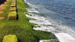 Ngắm rêu xanh cực lạ ngay giữa phố biển Nha Trang