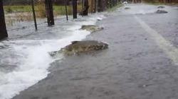 Cảnh tượng hiếm thấy: Cá hồi ngược đường phố trở về nguồn