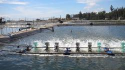 Danh mục thuốc cấm sử dụng, hạn chế sử dụng trong nuôi trồng thủy sản