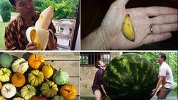 Khám phá những loại rau củ lạ kỳ trong thế giới rau củ quả