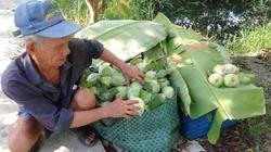 Từ 10.000 đồng rớt thảm còn 500 đồng/kg, nỗi buồn mùa ổi miền Tây