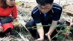 """Nông dân Hàn nói gì về cách trồng loại """"thần dược"""" tốt nhất thế giới?"""