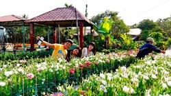 Hoa kiểng Sa Đéc đắt hàng, mỗi ngày làng hoa thu trăm triệu