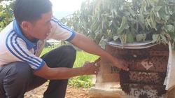 Ong đốt tím người để tìm ra mật ngọt