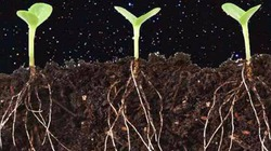Trung Quốc lên kế hoạch trồng khoai tây và nuôi tằm trên Mặt Trăng